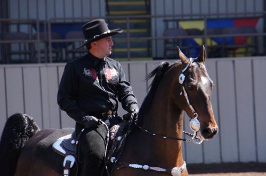 American Saddlebred western style horse