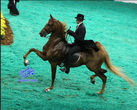 Howard is the official photographer for this horse show.  His photos are fabulous!